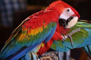 Le Costa Rica a misé sur l'écotourisme